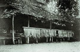 Baileo van Nuniali (Seram) met 48 gesnelde koppen (bron: Martin 1894)